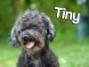 tinynew