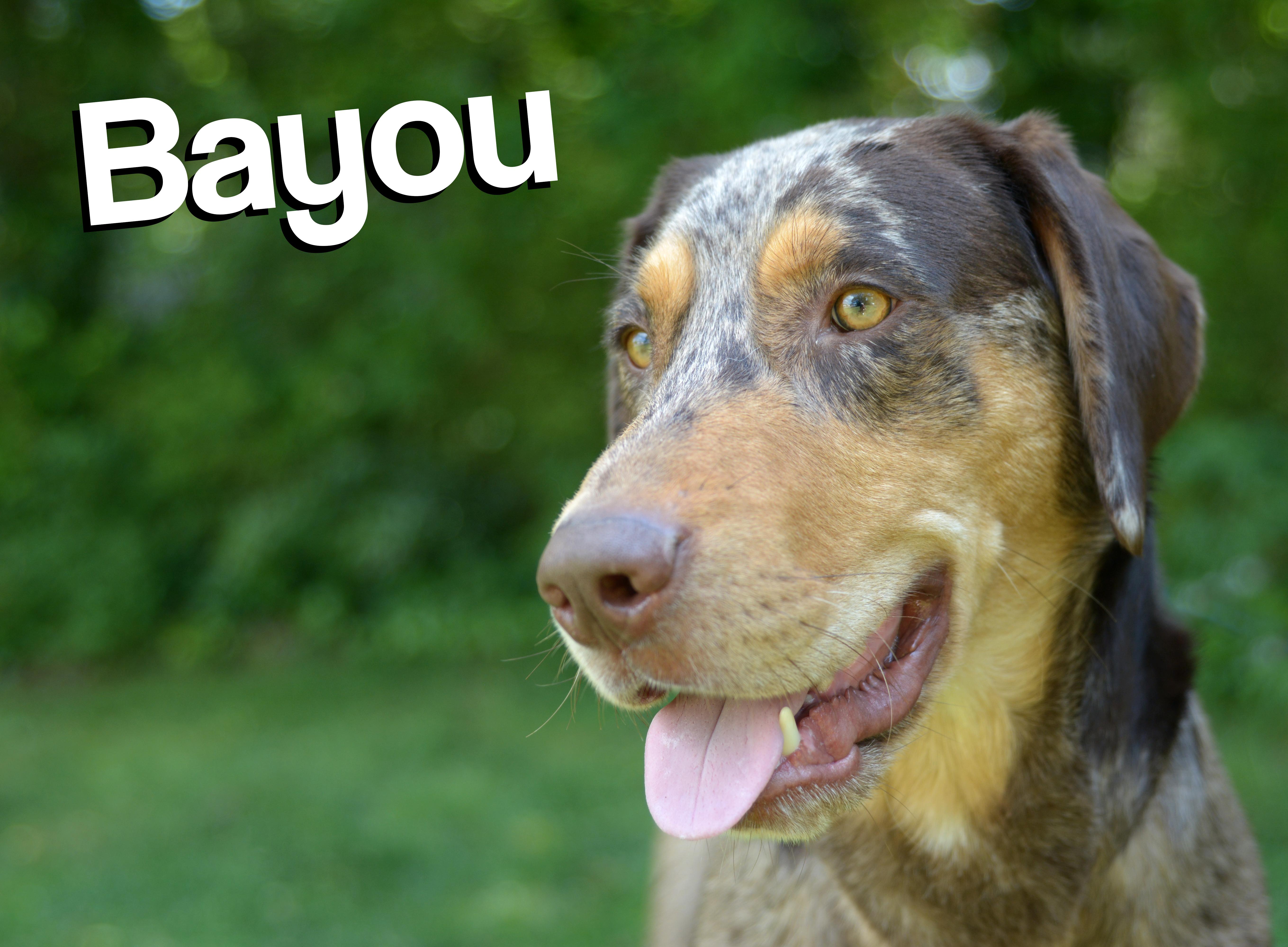 bayounew