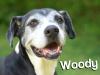 woodynew
