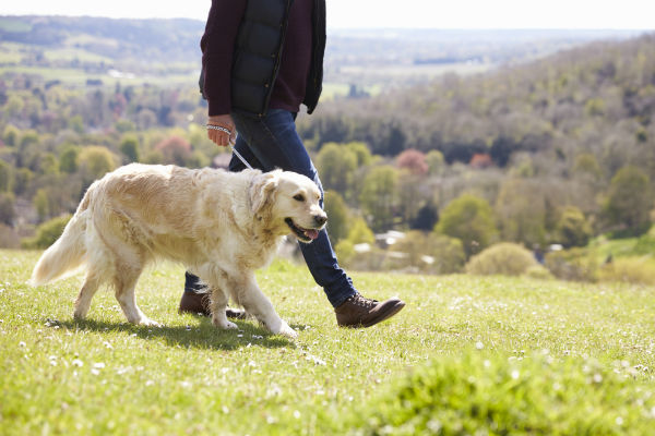 Why Walk Your Dog?