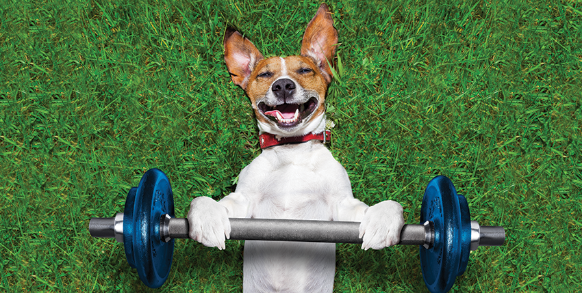 Does Your Dog Get Enough Exercise?